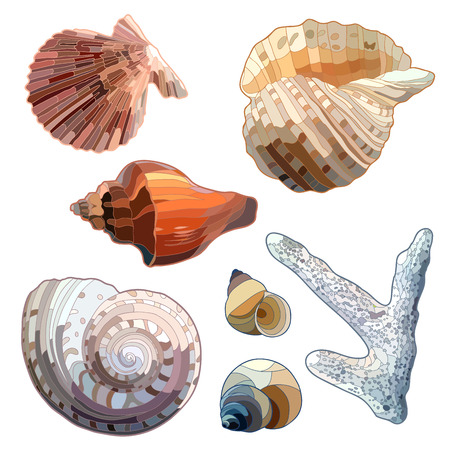 cockle: Set of Sea Shells And Coral. Vector illustration