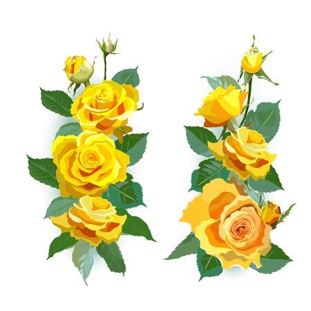 gele rozen: Set of yellow roses.