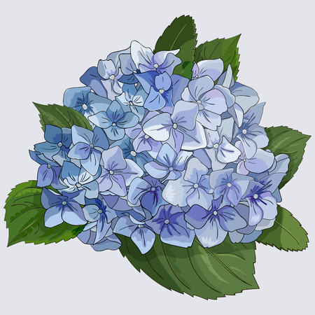 Watercolor style branch of hydrangea flowers. Isolated florals object on white background. Vector illustration. Editable element for design