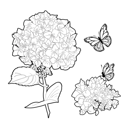 Bouquet of hydrangea flowers with leaves. Isolated floral object on white background. 일러스트
