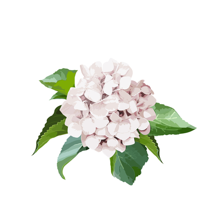 Bouquet of hydrangea flowers leaves. Isolated floral object on white background. Vector illustration. Editable element for design.