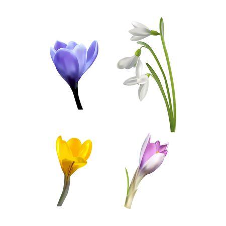 Snowdrop,crocus, primrose set. Flowers isolated on white background. Spring floral motif objects. Vector Illusztráció
