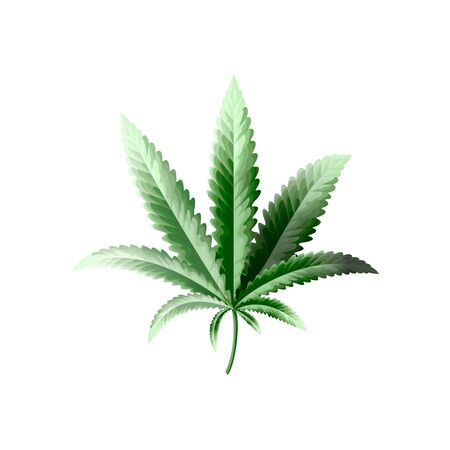 Marijuana or cannabis vector leaf. High quality isolated object for printing.