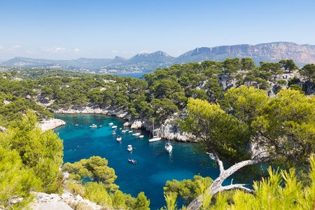 Calanques of Port Pin in Cassis  in France photo