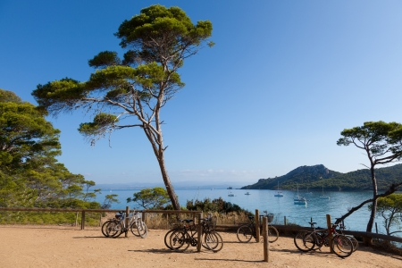Porquerolles island  in south of France photo
