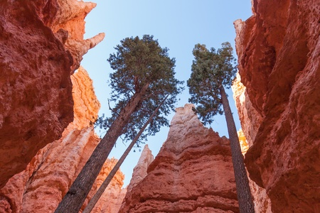 west coast: Bryce canyon national park in Utah  - USA Stock Photo