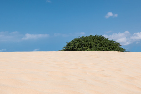 praia: Waves on sand dunes  in Chaves beach Praia de Chaves in Boavista Cape Verde - Cabo Verde