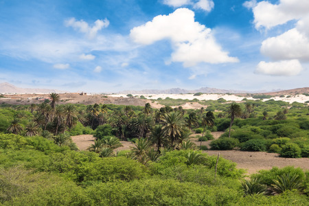 cape verde: Oasis near  Viana desert, Boavista - Cape Verde Stock Photo