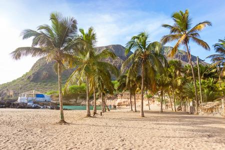 케이프 베르데 - 카보 베르데에서 산티아고 섬에 Tarrafal 해변에서 코코넛 나무