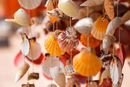 Sea shells close up in Santa Maria beach in Cape Verde Stock Photo