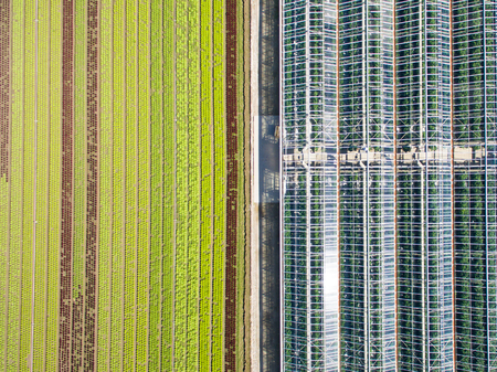 aerial view: Aerial agricultural view of lettuce production field and greenhouse