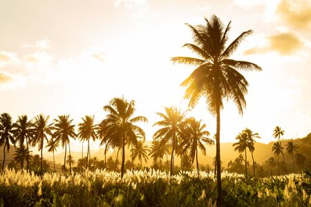 Sunset on coconut and sugar canne plantation near Achada Fazenda in Santiago Island in Cape Verde - Cabo Verde