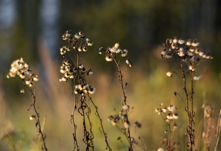 Wild nature of Russia in the summer. Flowers and plants Stock Photo