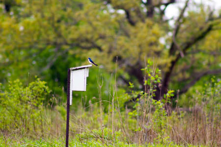 barn swallow: Barn Swallow perching on a house