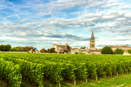 Vineyards of Saint Emilion, Bordeaux Wineyards in France in a sunny day 스톡 콘텐츠