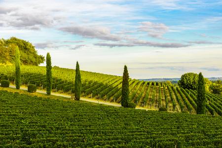 Zonsonderganglandschap van bordeaux-wijngaarden in Aquitaine-gebied, Frankrijk