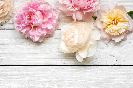 pink and creamy peony flowers on white wooden background. flat lay. top view with copy space. mock up. wedding card 免版税图像