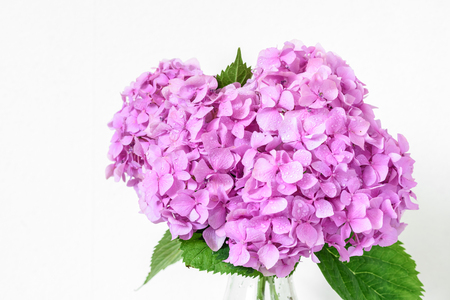 beautiful bouquet of pink hydrangea flowers with water drops. spring holiday or wedding background. greeting card. close up