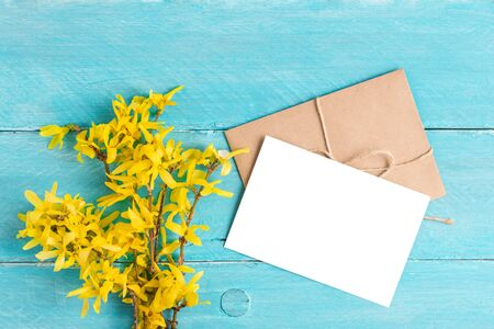 blank white greeting card with spring yellow flowers of forsythia on blue wooden background. top view with copy space. flat lay Stok Fotoğraf