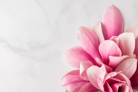 Pink magnolia flowers composition. Spring concept. Womens day or wedding background. flat lay. close up