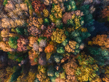 Autumn forest aerial drone view. Trees with colorful orange, red, yellow and green leaves. nature concept