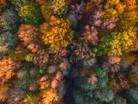 Aerial view of beautiful autumn forest. Beautiful landscape with trees with green, red and orange leaves. Top view from flying drone