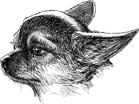 Vector sketch of the head of a chihuahua dog.