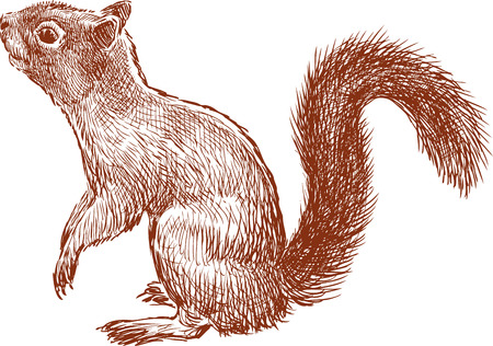 Vector sketch of a curious squirrel.