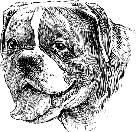 Vector image of the portrait of a big guard dog. Illusztráció