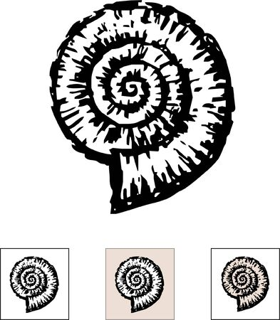 Vector drawing of a fossil mollusc - nautilus. Çizim