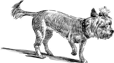 lapdog: Sketch of a cute lapdog.