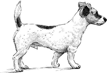 Vector drawing of a spotted terrier.