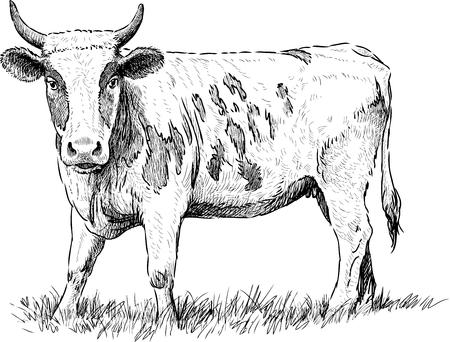Vector sketch of a grazing cow.