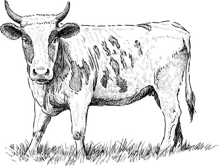 Vector sketch of a grazing cow.