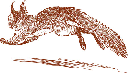 Vector sketch of a jumping squirrel. Illustration