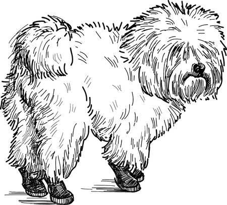Vector image of a lapdog on a stroll.