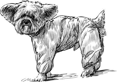 The vector image of a funny lap dog. Illustration