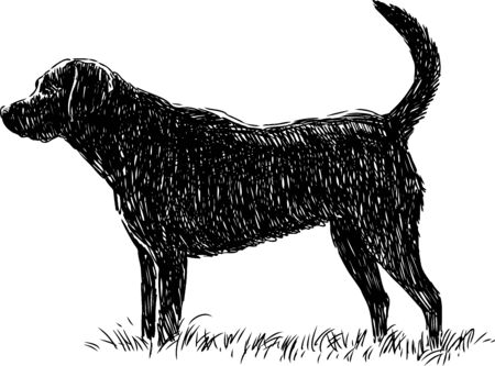 black and white newfoundland dog: The vector image of a black guard dog.