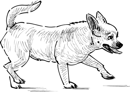The sketch of a walking small dog. Illustration
