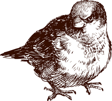 The vector image of an angry sparrow.