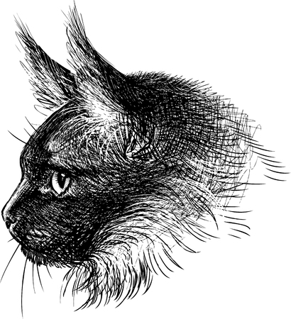THe vector image of the head of a domestic cat.