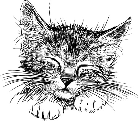 Vector sketch of the portrait of a cute kitten.