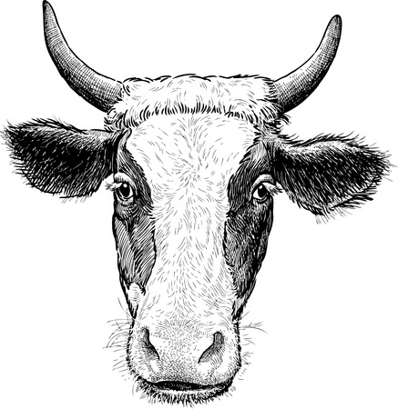 Vector drawing of the head of a spotted cow. Çizim