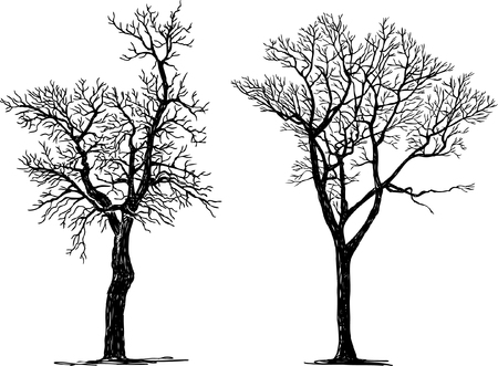 Vector drawing of silhouettes of two various trees.