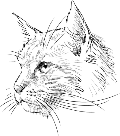 whiskers: Vector sketch of a cat head.