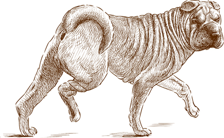 VEctor drawing of a striding guard dog. Illustration