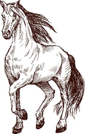 El dibujo del vector de un caballo que camina. Foto de archivo - 80108758