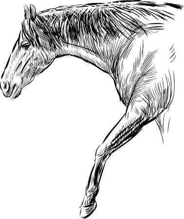 Vector sketch of a walking horse. Çizim