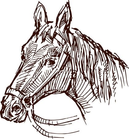 Vector drawing a horses head in the style of the sketch. Ilustração