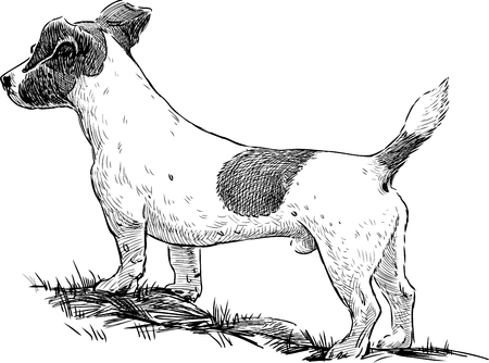Vector drawing of a watching dog. Illustration